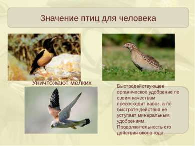 Значение птиц для человека Истребляют насекомых вредителей садов и огородов Н...