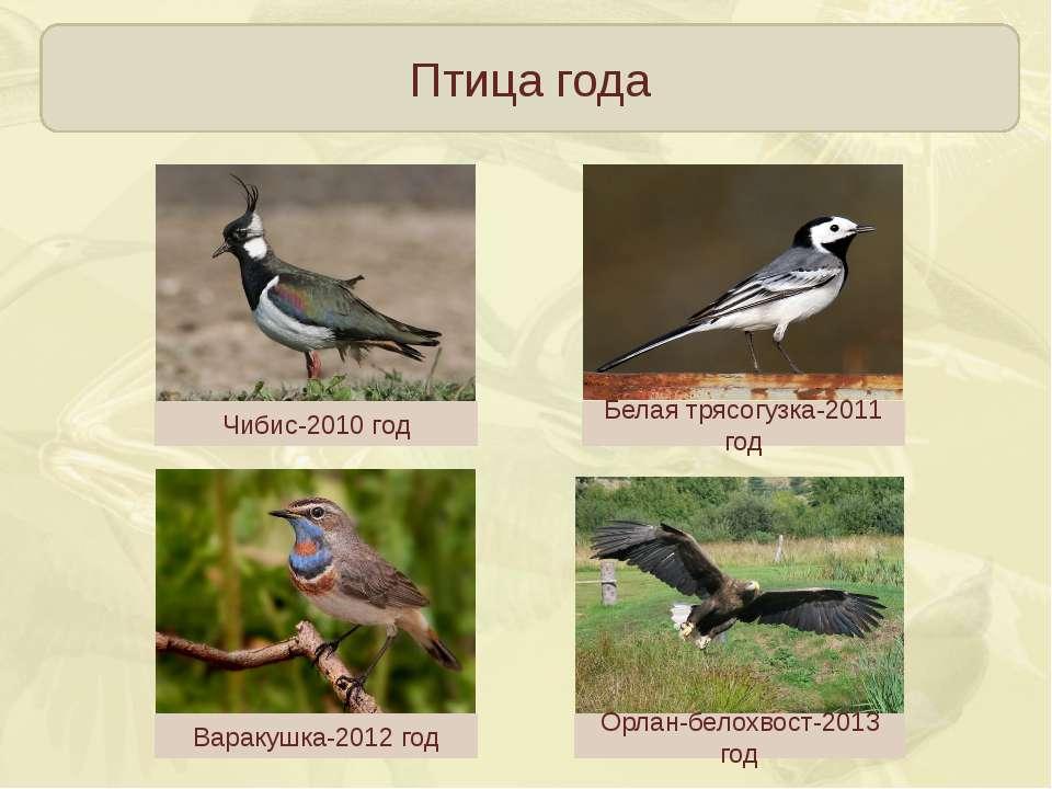 Птица года Чибис-2010 год Белая трясогузка-2011 год Варакушка-2012 год Орлан-...