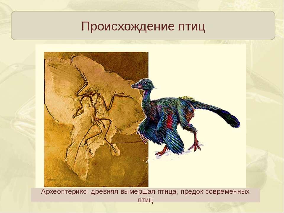 Происхождение птиц Археоптерикс- древняя вымершая птица, предок современных птиц