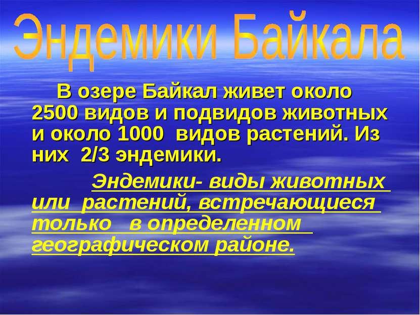 В озере Байкал живет около 2500 видов и подвидов животных и около 1000 видов ...