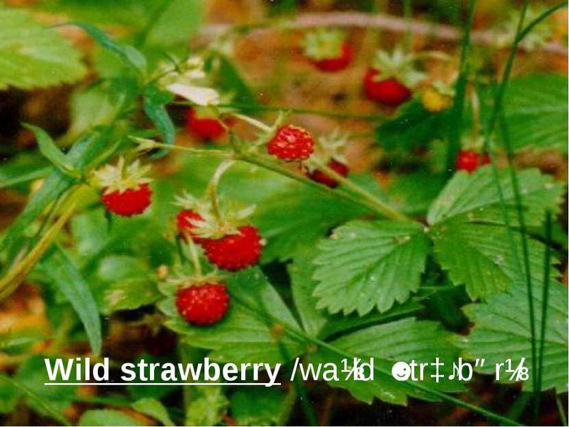 Wild strawberry/waɪld ˈstrɔːbərɪ/