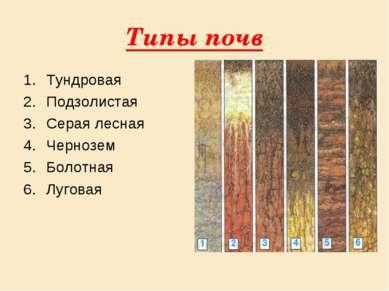 Типы почв Тундровая Подзолистая Серая лесная Чернозем Болотная Луговая