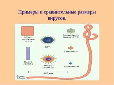 Примеры и сравнительные размеры вирусов.