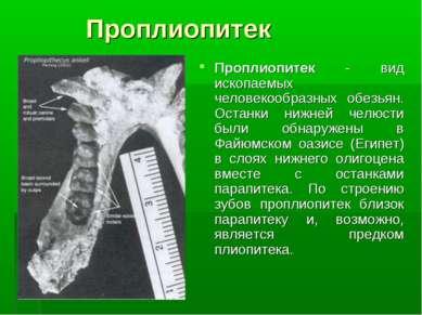Проплиопитек Проплиопитек - вид ископаемых человекообразных обезьян. Останки ...
