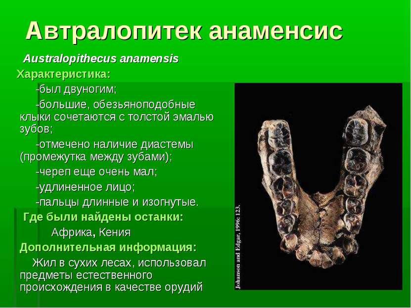 Автралопитек анаменсис Australopithecus anamensis Характеристика: -был двуног...