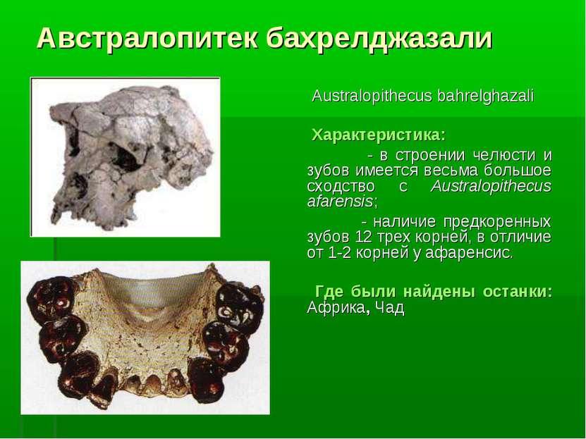 Австралопитек бахрелджазали Australopithecus bahrelghazali Характеристика: - ...