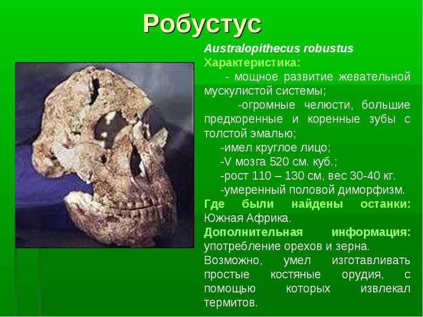 Робустус Australopithecus robustus Характеристика: - мощное развитие жеватель...