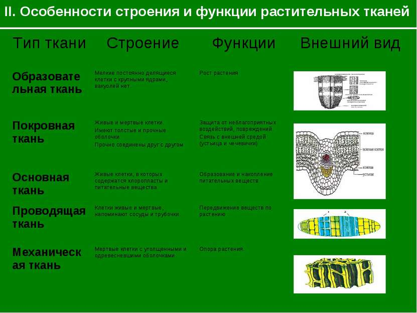 II. Особенности строения и функции растительных тканей Тип ткани Строение Фун...