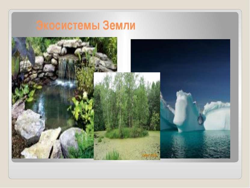 Экосистемы Земли