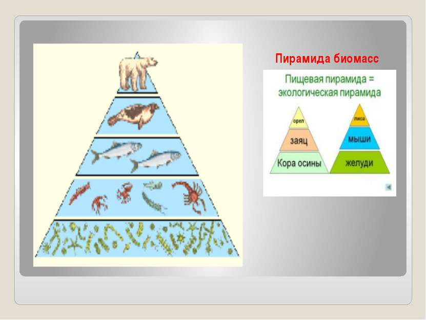 Пирамида биомасс