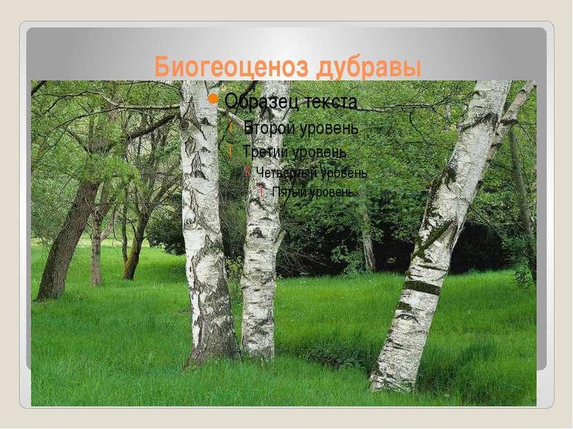 Биогеоценоз дубравы