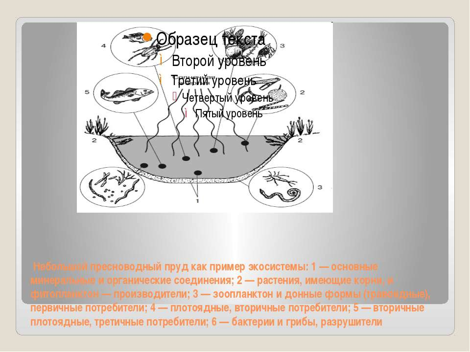 Небольшой пресноводный пруд как пример экосистемы: 1 — основные минеральные и...