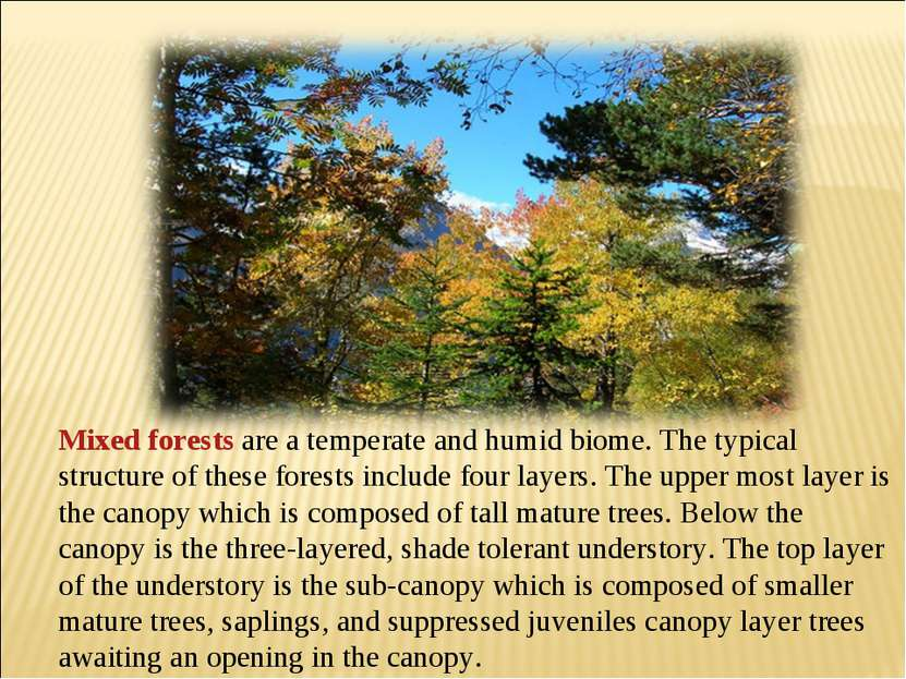 Mixed forests are a temperate and humid biome. The typical structure of these...