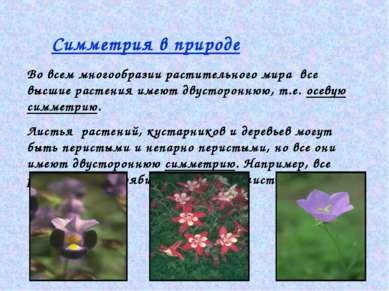 Симметрия в природе Во всем многообразии растительного мира все высшие растен...