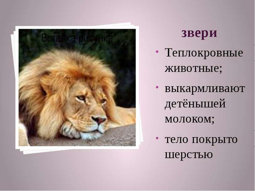 звери Теплокровные животные; выкармливают детёнышей молоком; тело покрыто шер...