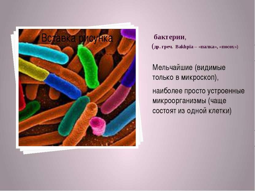бактерии, (др. греч. Bakhpia – «палка», «посох») Мельчайшие (видимые только в...