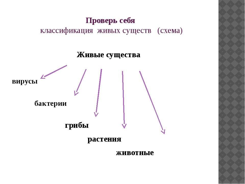 Проверь себя классификация живых существ (схема) Живые существа вирусы бактер...
