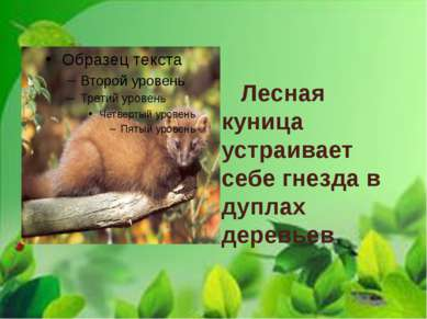 Лесная куница устраивает себе гнезда в дуплах деревьев.