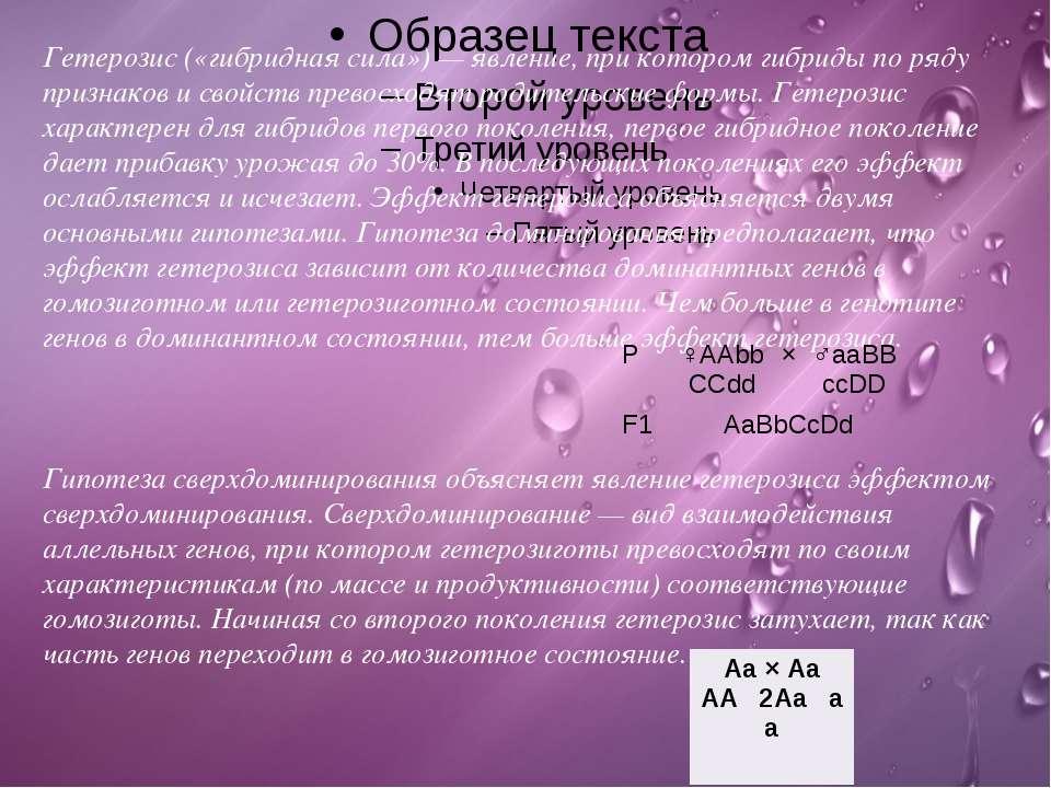Гетерозис(«гибридная сила») — явление, при котором гибриды по ряду признаков...