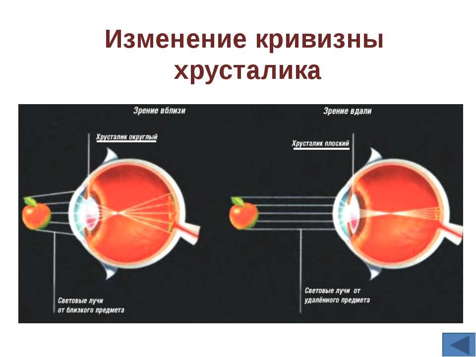 Корковая часть Зрительного анализатора
