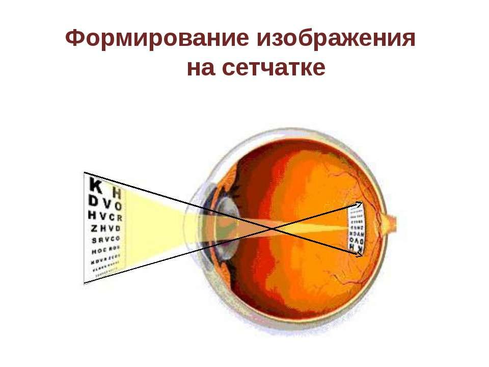 Бинокулярное зрение Благодаря тому, что у нас имеется два глаза, каждый из ко...