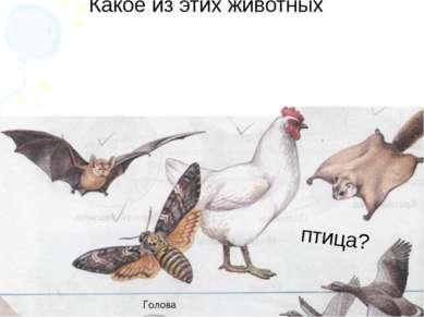 птица? Какое из этих животных