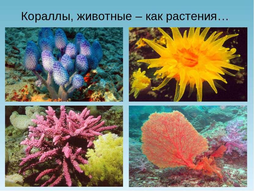 Кораллы, животные – как растения…