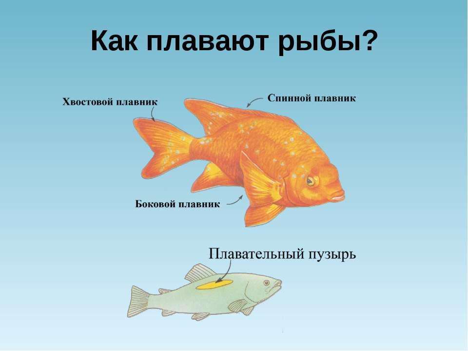 Как плавают рыбы?