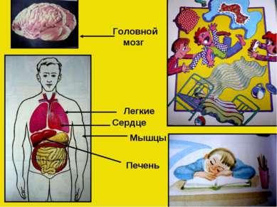 Головной мозг Мышцы Легкие Печень Сердце