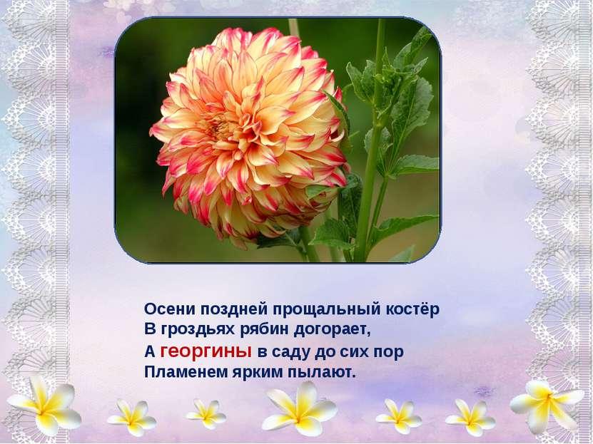 Анютины глазки - Цветочек из сказки, В них - вера, надежда, любовь. Анютины г...