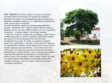 ПАУ - БРАЗИЛ(Pau-Brasil), дерево, из которого добывали красный краситель для...