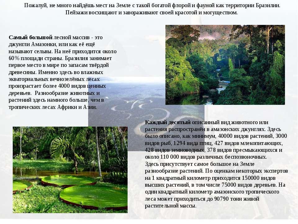 Самый большой лесной массив - это джунгли Амазонки, или как её ещё называют с...