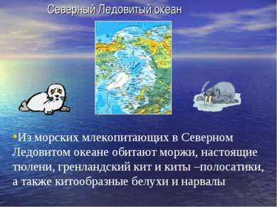 Северный Ледовитый океан Из морских млекопитающих в Северном Ледовитом океане...