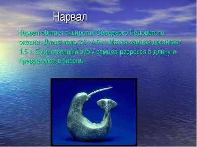 Нарвал Нарвал обитает в широтах Северного Ледовитого океана. Длина тела 3.5 -...