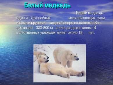 Белый медведь Белый медведь - один из крупнейших млекопитающих суши и самый к...