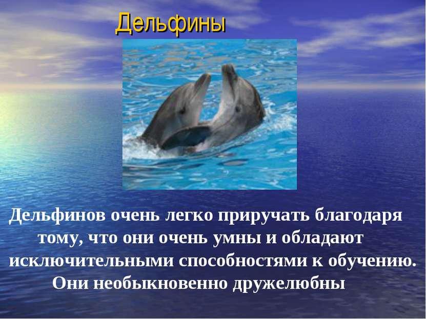 Дельфины Дельфинов очень легко приручать благодаря тому, что они очень умны и...