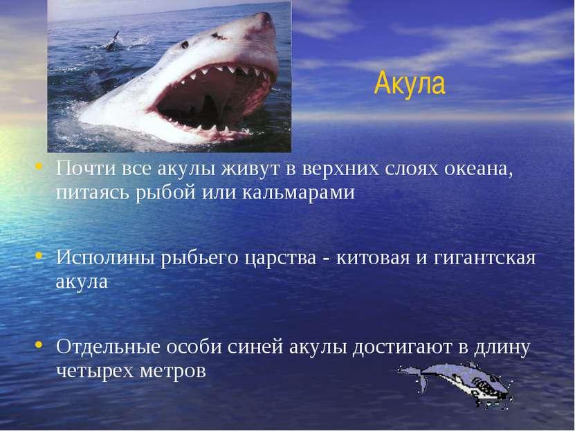 Акула Почти все акулы живут в верхних слоях океана, питаясь рыбой или кальмар...