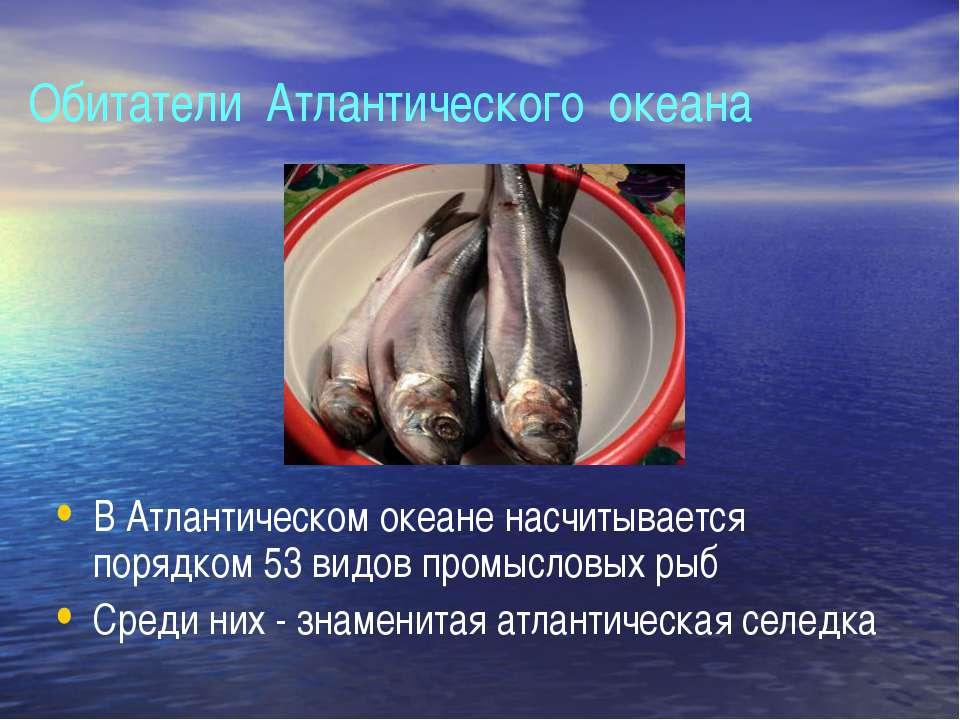 Обитатели Атлантического океана В Атлантическом океане насчитывается порядком...