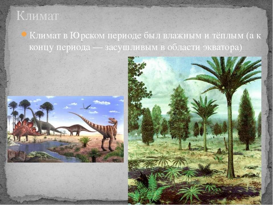 Климат в Юрском периоде был влажным и тёплым (а к концу периода— засушливым ...
