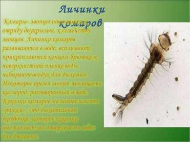 Личинки комаров