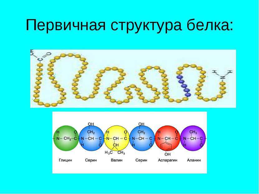 Первичная структура белка:
