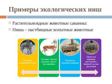 Примеры экологических ниш Растительноядные животные саванны: Ниша – пастбищны...
