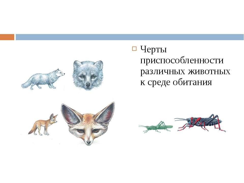 Черты приспособленности различных животных к среде обитания