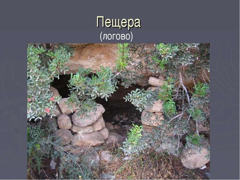 Пещера (логово)