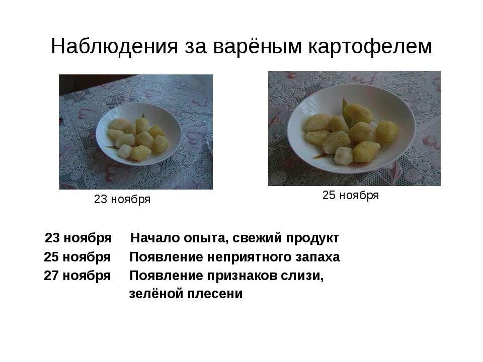 Наблюдения за варёным картофелем 23 ноября Начало опыта, свежий продукт 25 но...