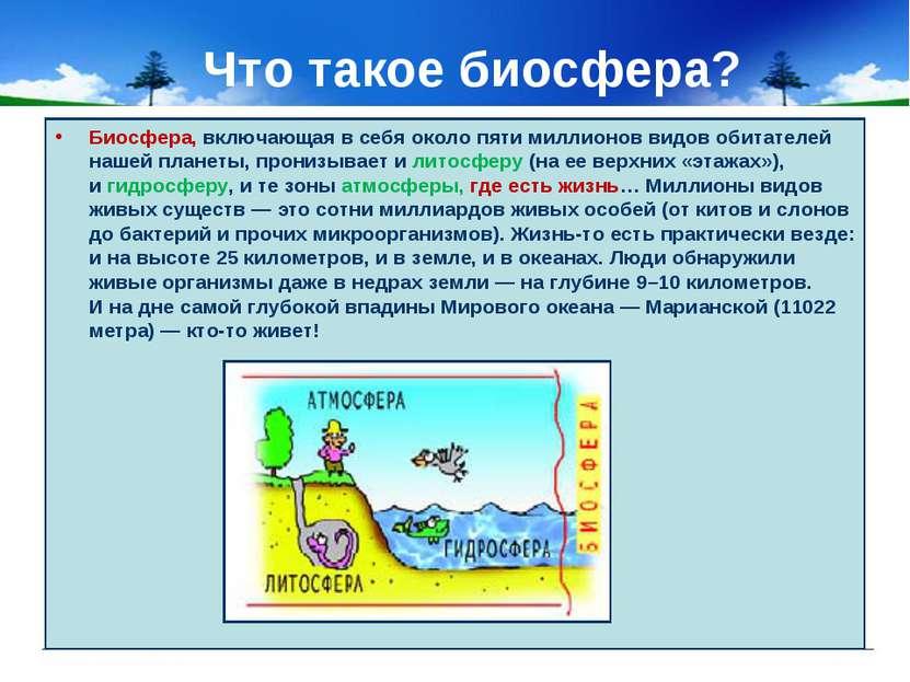 Что такое биосфера? Биосфера, включающая всебя около пяти миллионов видов об...