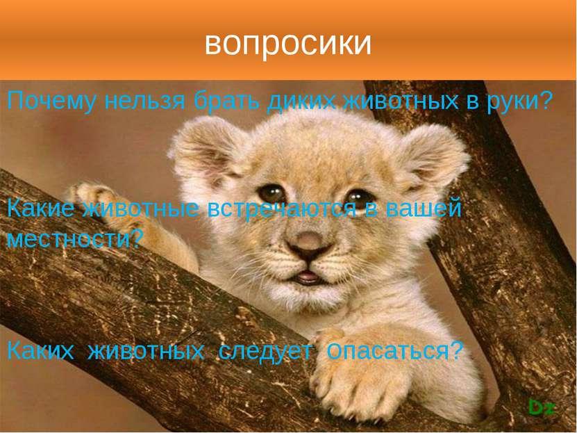 вопросики Почему нельзя брать диких животных в руки? Какие животные встречают...