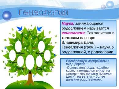 Родословную изображали в виде дерева. Основатель рода, подобно корню, помещал...