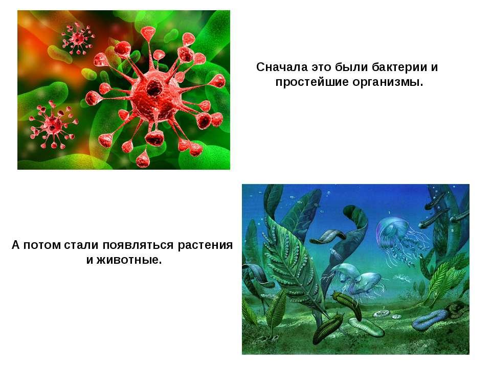 Сначала это были бактерии и простейшие организмы. А потом стали появляться ра...