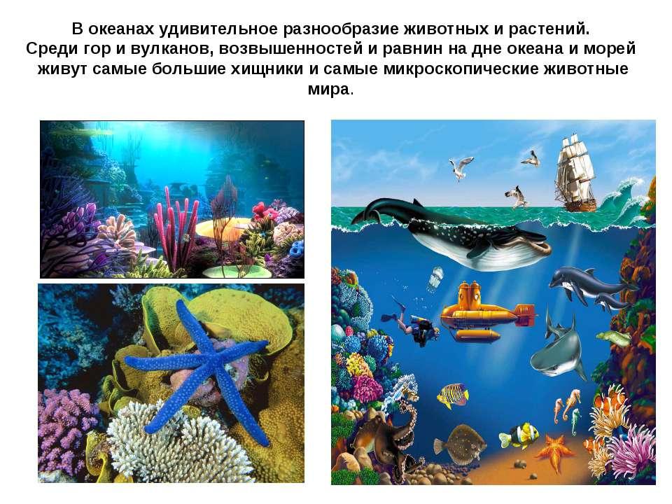 В океанах удивительное разнообразие животных и растений. Среди гор и вулканов...